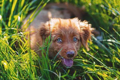 antiinflamatorios-naturales-para-perros